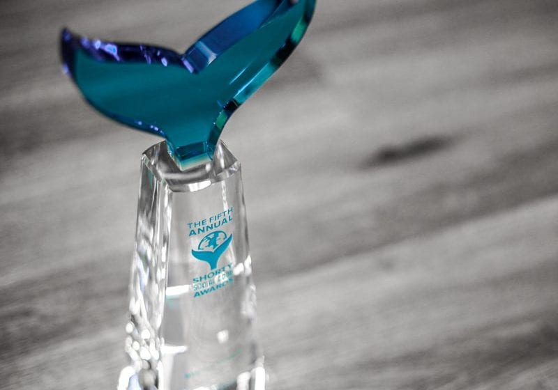 clear and blue crystal award statue whale tail engraved and colorfill statue